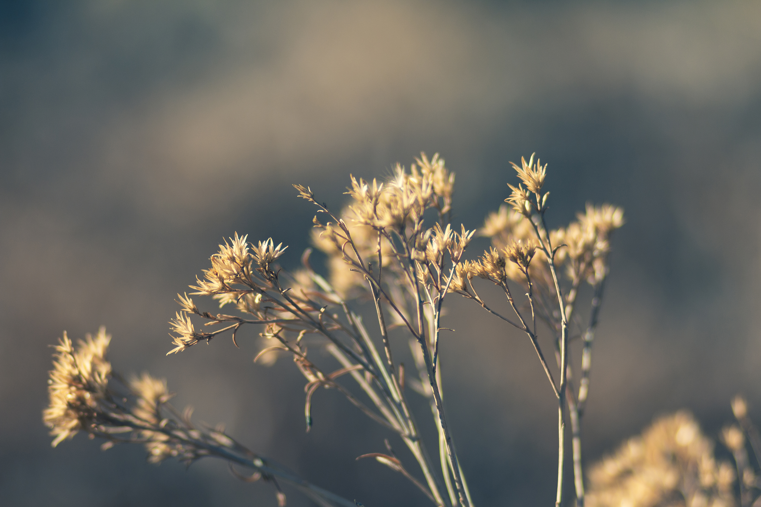 Matt Grandbois Photography — IMG_7824