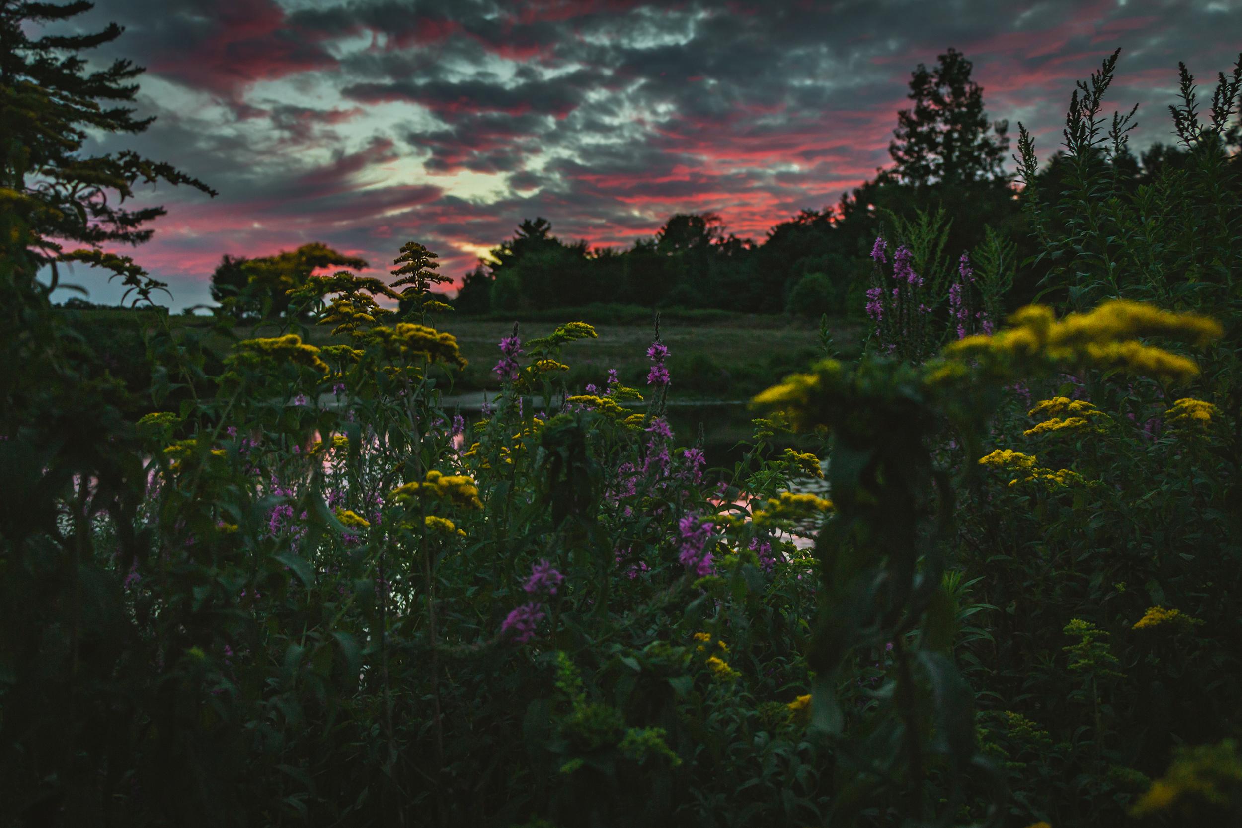 Matt Grandbois Photography — great_brook_sunset