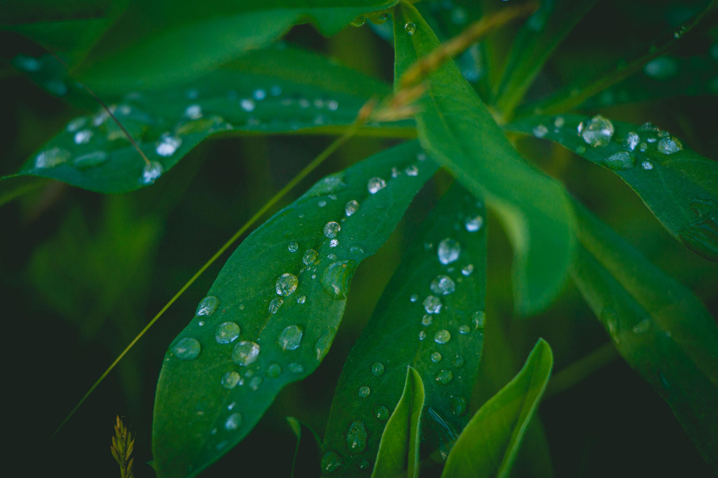 Matt Grandbois Photography — macro_droplets_2